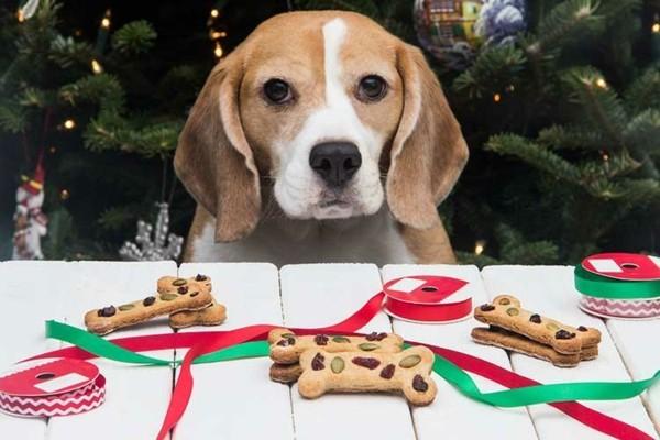 weichnachtsgeschenke hundeleckerlies ideen hundekekse selber backen
