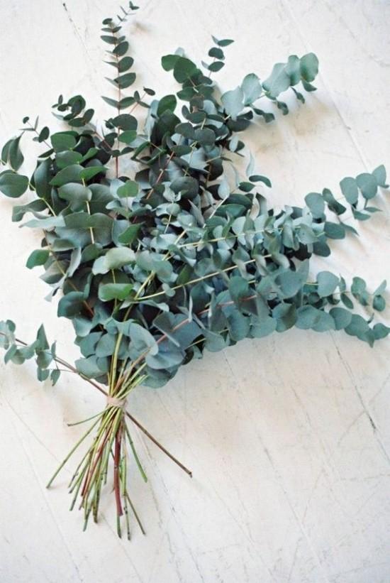 Dekorative Funktion Eukalyptusblätter richtig nutzen
