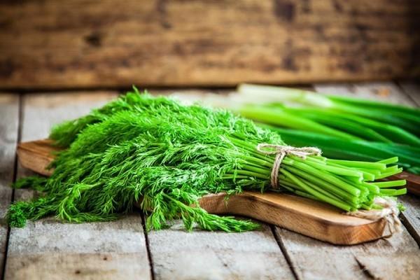 Dill frische Stiele grüne Blätter als Küchengewürz verwenden