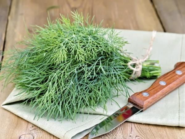 Dill frische grüne Blätter beim Kochen in der Küche verwenden