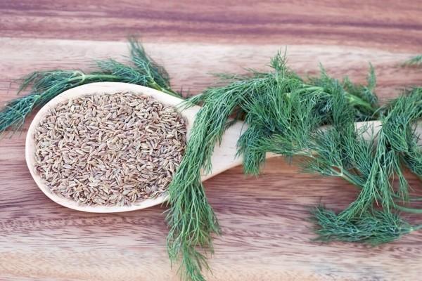 Dill grüne Blätter getrocknete Samen verwenden Heilmedizin