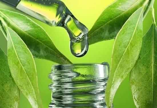 Eukalyptus Blätter ätherisches Öl breiten Einsatz Medizin