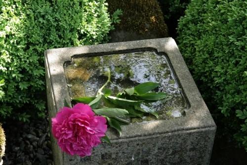 Feng Shui Gartenideen Wassertränke für Vögel rote Blume