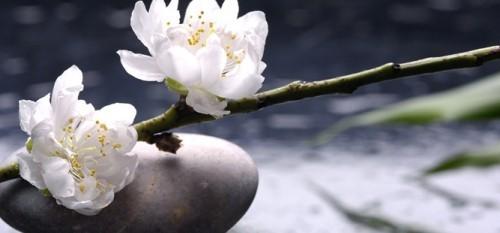 Gartenideen Feng Shui runder Stein weiße Blüten