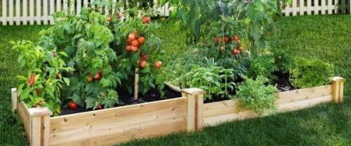 Gemüsegarten attraktiv machen Hochbeete