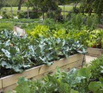 Hochbeete und deren Vorteile für Sie und den Garten