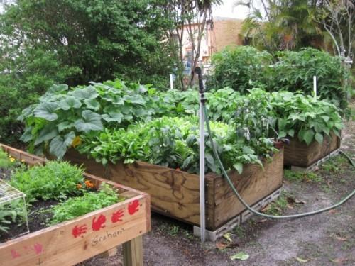Hochbeete Ordnung Sauberkeit Gemüsegarten