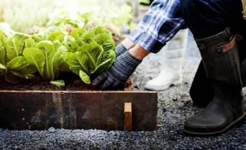 Hochbeete hochwertiger Mutterboden wichtig für das Gemüse