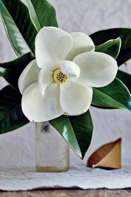 Magnolie Blüten Zweige in Vase herrliche Deko