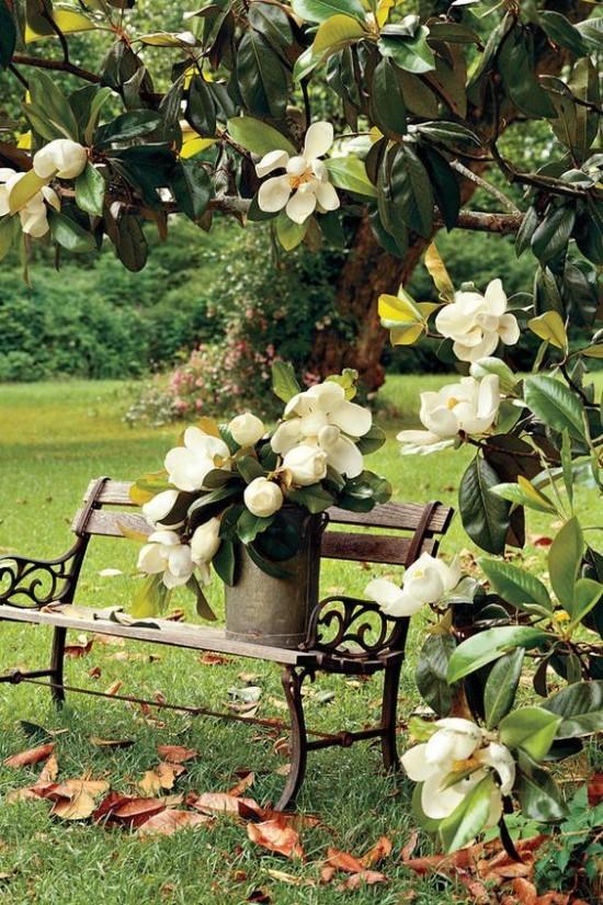 Magnolie grüne Blätter weiße Blüten Kunst der Natur