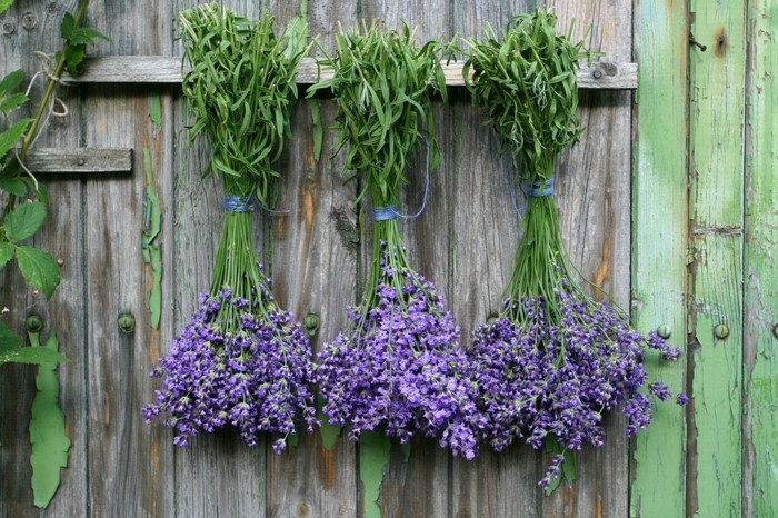 gartenpflanzen mit denen man ungeziefer bek mpfen und fernhalten kann. Black Bedroom Furniture Sets. Home Design Ideas