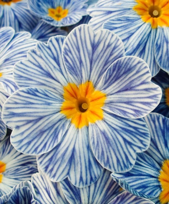 15 bekannte und bienenfreundliche pflanzen f r garten oder for Pflanzen fur pralle sonne