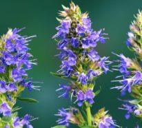15 bekannte und bienenfreundliche Pflanzen für Garten oder Balkon