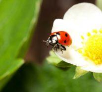 Blattläuse natürlich bekämpfen- 10 Hausmittel und frische Tipps
