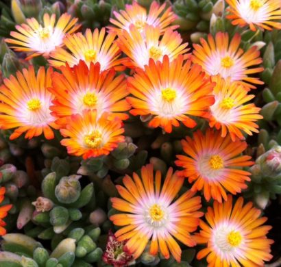 bl hende bodendecker diese 20 pflanzen sorgen f r. Black Bedroom Furniture Sets. Home Design Ideas