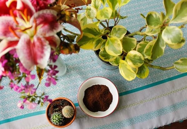 kaffeesatz als dünger benutzen für pflanzen und blumen