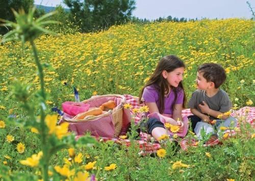 mitten in einer gelb-grünen wiese picknick ideen