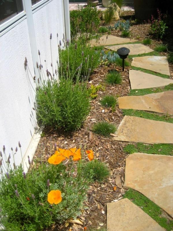 moos und lavender geegen unkraut pflasterfugen begrünen bodendecker pflanzen