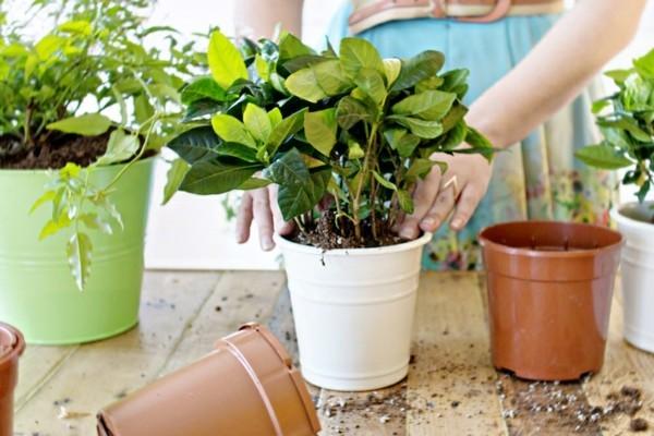 pflanzer töpfe in mehreren farben