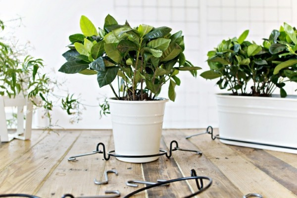 pflanzer vorbereitung prozess