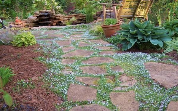 pflasterfugen begrünen mit bodendecker pflanzen gartengestaltung