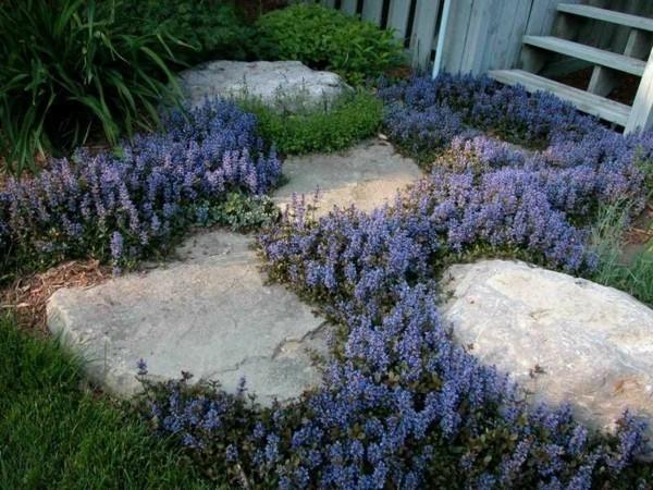 pflasterfugen bodendecker pflanzen gegen unkraut