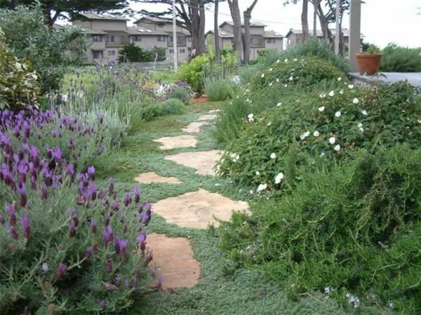 pflasterfugen gegen unkraut begrünen bodendecker pflanzen