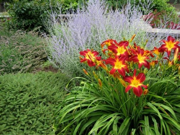 taglilien hemerocallis rot gelbe blüten