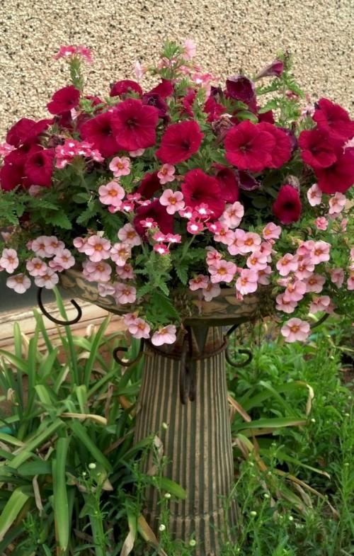 topfblumen gartendeko ideen farbenfroh