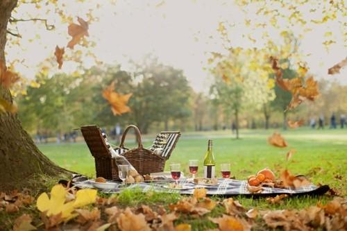 unter dem baum picknick ideen