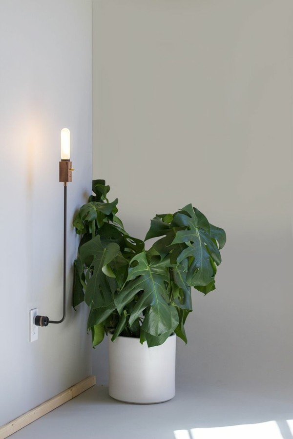 wandleuchten innen moderne wandlampe pflanze beleuchten