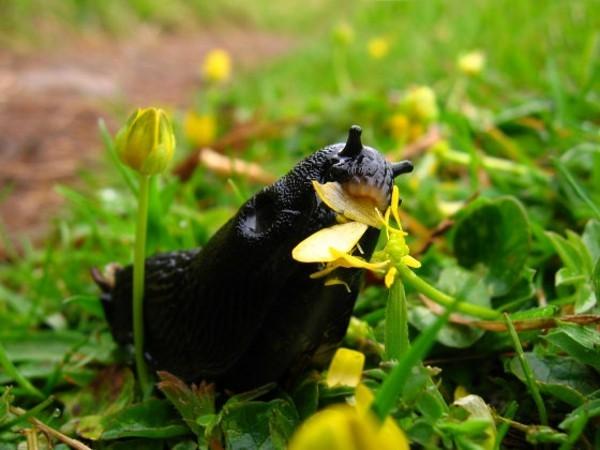 ökologische mittel gegen schnecken