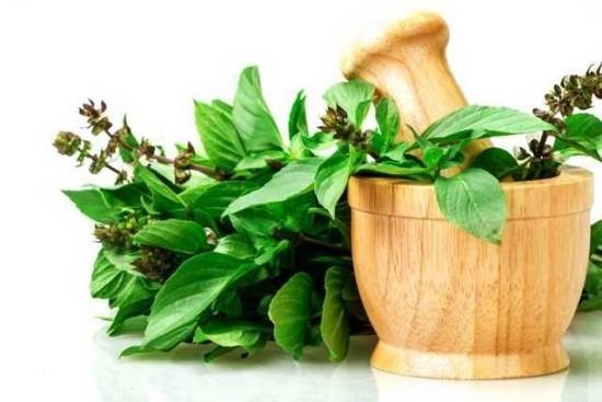Basilikum Blätter Blüten Medizin aus der Natur