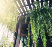 Grüne luftreinigende Zimmerpflanzen im Portrait