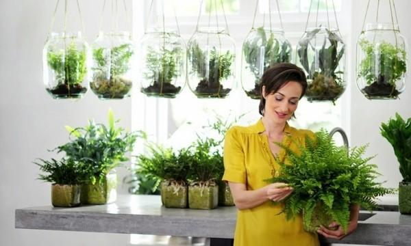 Luftreinigende Zimmerpflanzen gutes Arrangement viel Grün saubere Raumluft