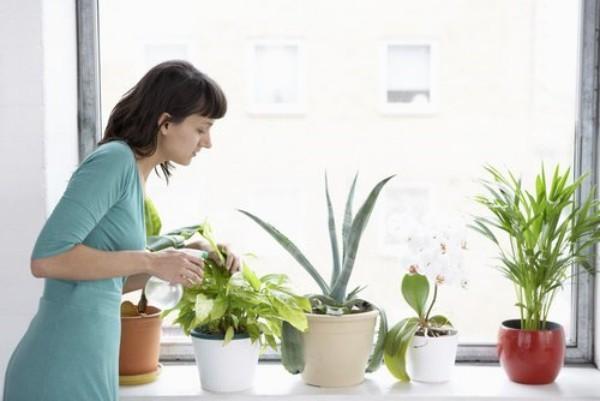 Luftreinigende Zimmerpflanzen richtig zu Hause pflegen gießen düngen