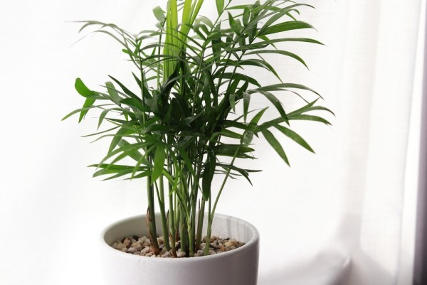 Green air purifying house plants in portrait
