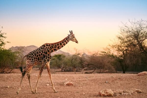 Safari-Trip Ostafrika perfekter Ort Singlereisen