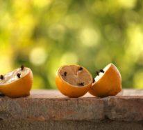 15 Hausmittel gegen Ameisen: So vertreiben Sie die kleinen Plagegeister aus dem Haus
