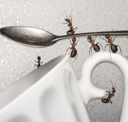15 hausmittel gegen ameisen so vertreiben sie die kleinen plagegeister aus dem haus. Black Bedroom Furniture Sets. Home Design Ideas