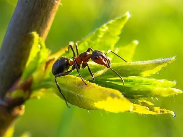 hausmittel gegen ameisen natürlich