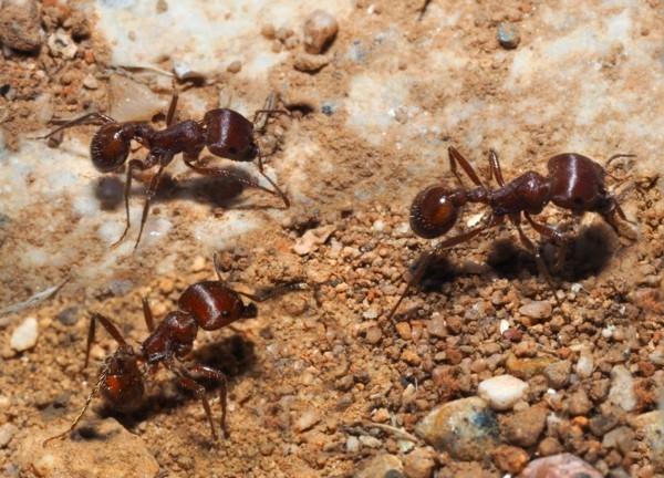 15 hausmittel gegen ameisen so vertreiben sie die kleinen. Black Bedroom Furniture Sets. Home Design Ideas