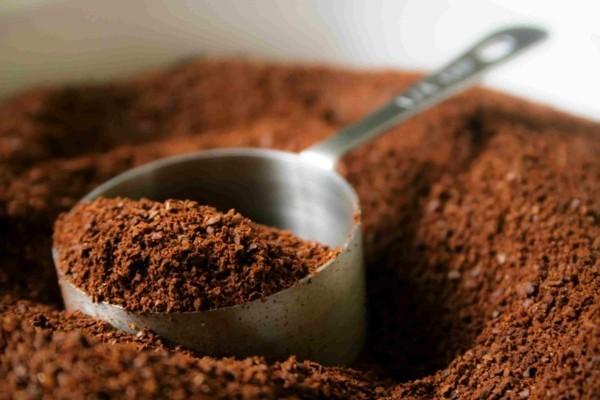 kaffeesazt als hausmittel gegen ameisen