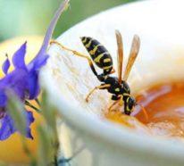 Mittel gegen Wespen: So vertreiben Sie die frechen Störenfriede ganz bestimmt