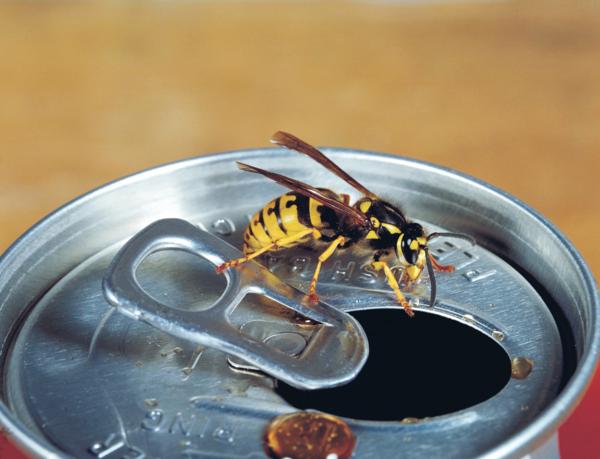 mittel gegen wespen geöfnete Cola Dose vermeiden