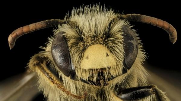 5 Mittel Gegen Wespen Mit Diesen Tipps Und Tricks Vertreiben Sie