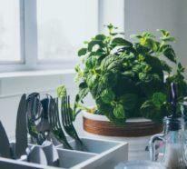 10 Heilkräuter, mit denen man viele lästige Schädlinge aus dem Garten verjagen kann