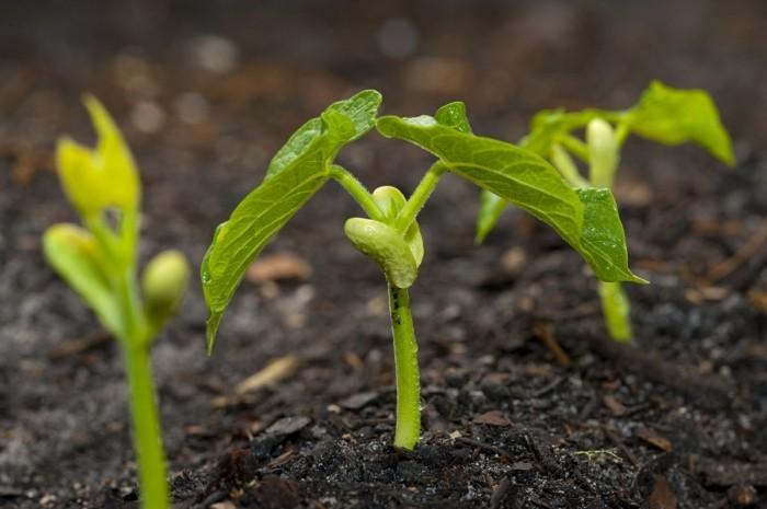schaedlinge heilkraeuter raupen moegen juenge pflanzen