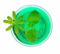 Waldmeister Rezepte und warum wir diese Pflanze so sehr lieben?