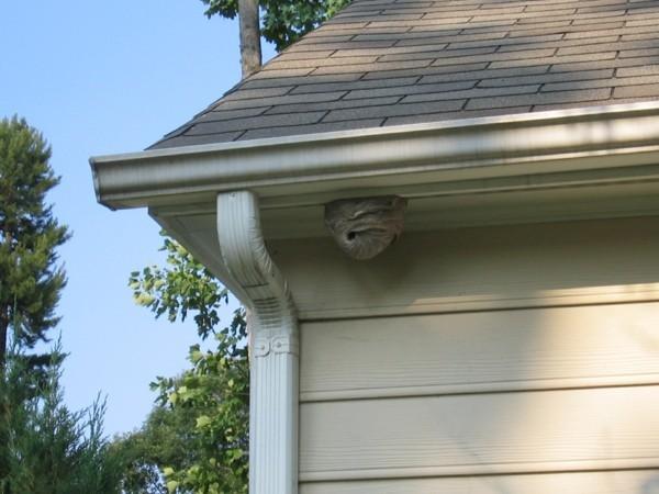 wespen vertreien mittel gegen wespen wespennest am dach